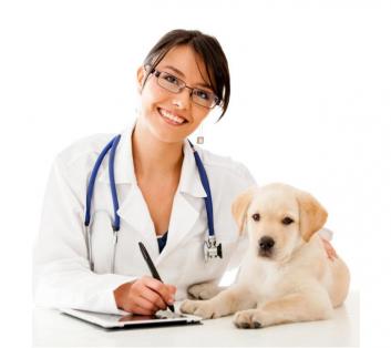 Ветеринарный хирург
