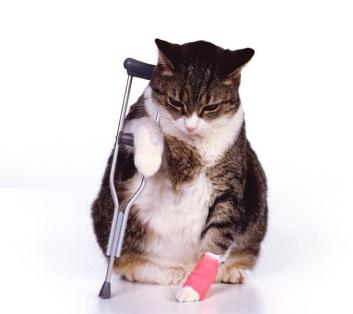 Ветеринарный ортопед-травматолог