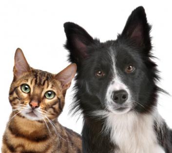 Ветеринарная нефрология и урология