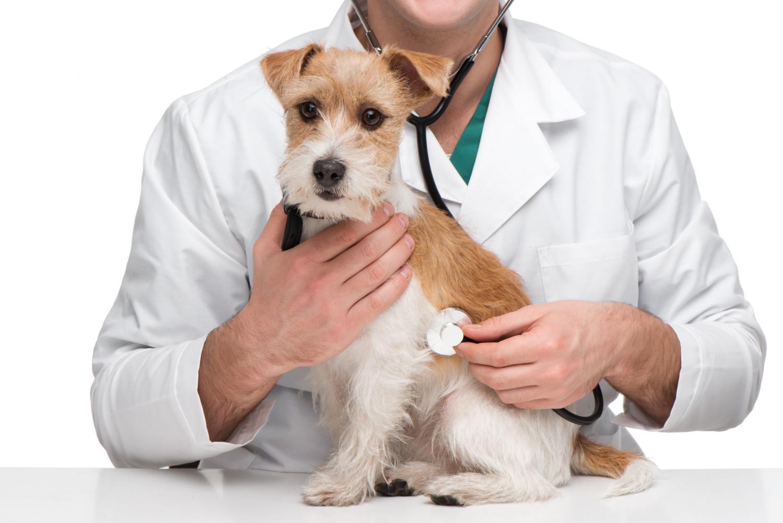 Ветеринарный онколог